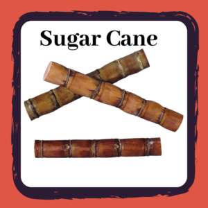 Three sticks of sugar cane on white background